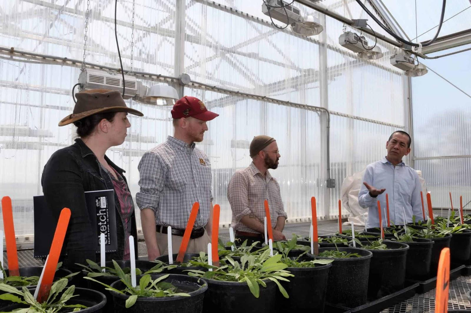 Axel Garcia y Garcia describing camelina nitrogen rate trails to members of the INFEWS Team at the University of Minnesota's Southwest Research and Outreach Center in Lamberton, MN on May 15, 2019.
